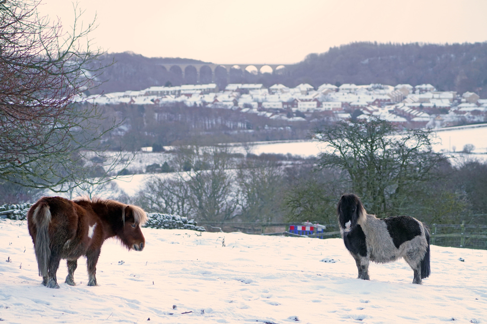 Animals stand in a snow-covered field near Castleside in County Durham, with Hownsgill viaduct in the distance. Picture date: 9 February 2021