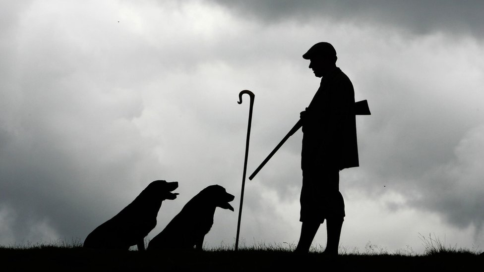 Gamekeeper carrying gun with two dogs