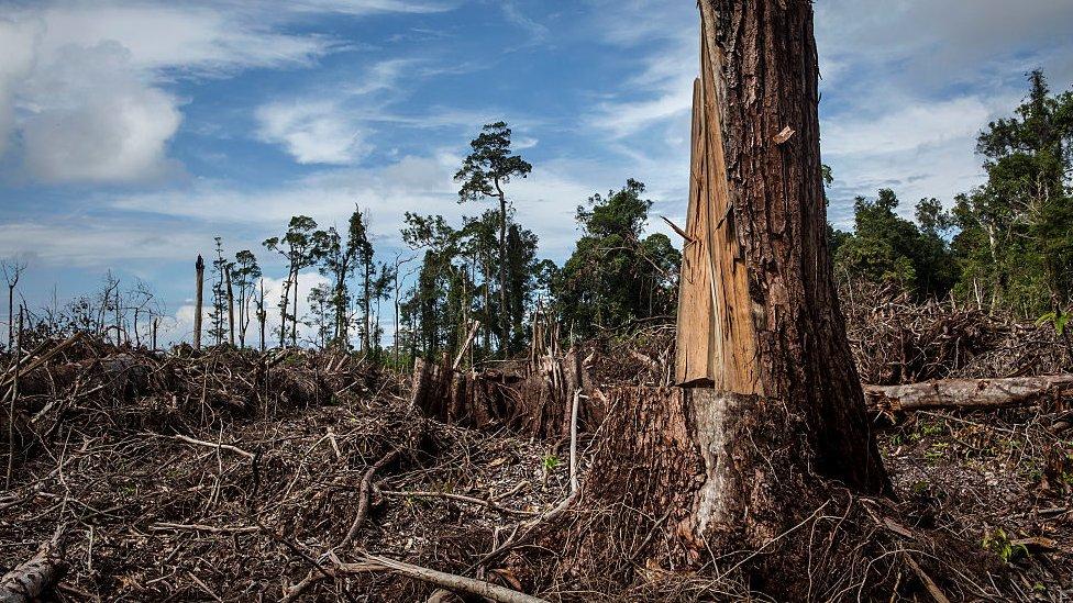 Spaljene šume u Maleziji