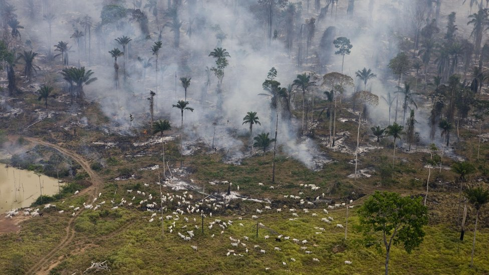 Human-made fires designed to clear the Brazilian rainforest for cattle and crops