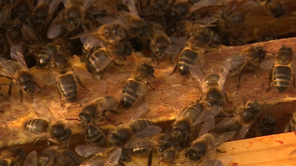 Beekeeper warns potential neighbours over 'deadly' stings
