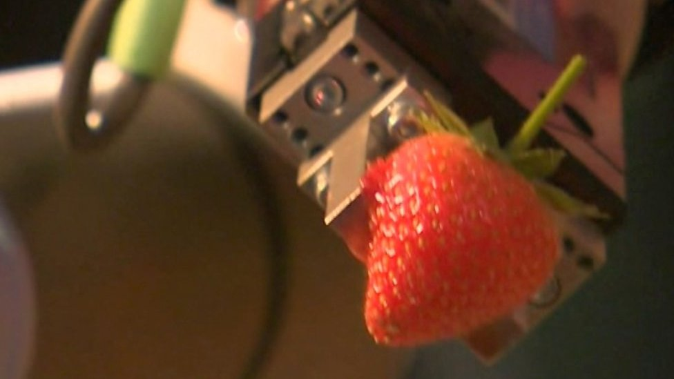 Tiptree joins race to build fruit-picking robots