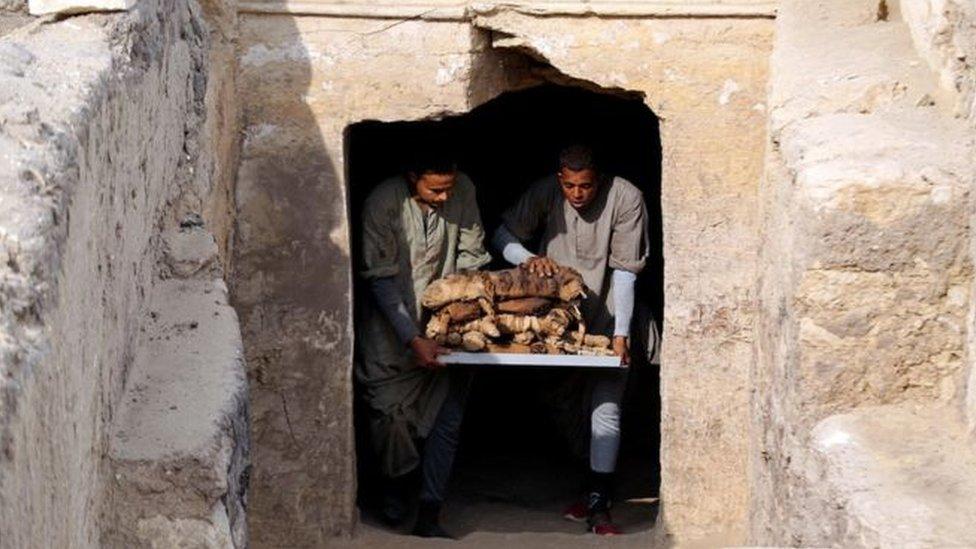 數十具貓木乃伊正在烏瑟卡夫王(King Userkaf)金字塔旁的古墓中出土