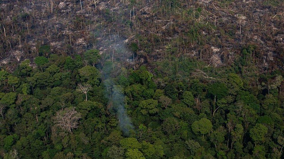 Un bosque del Amazonas en llamas.