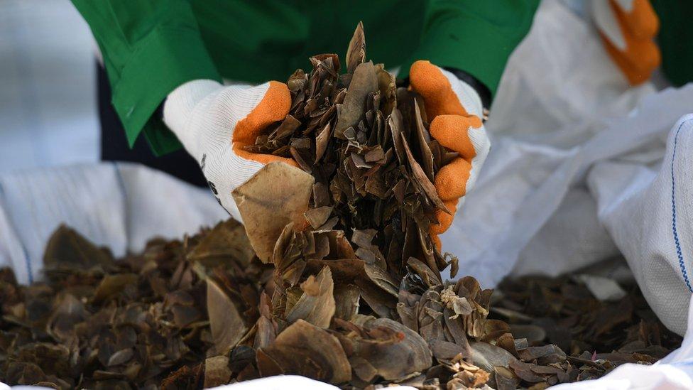 Seizure of pangolin scales in Malaysia