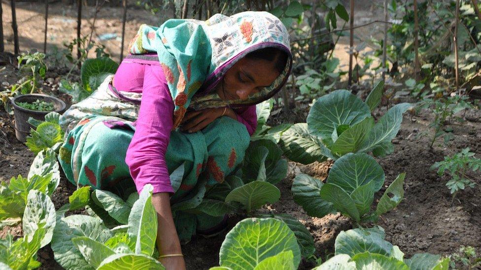 Woman gardening in Bangladesh