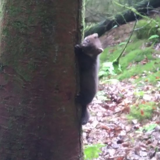 Kit climbing tree