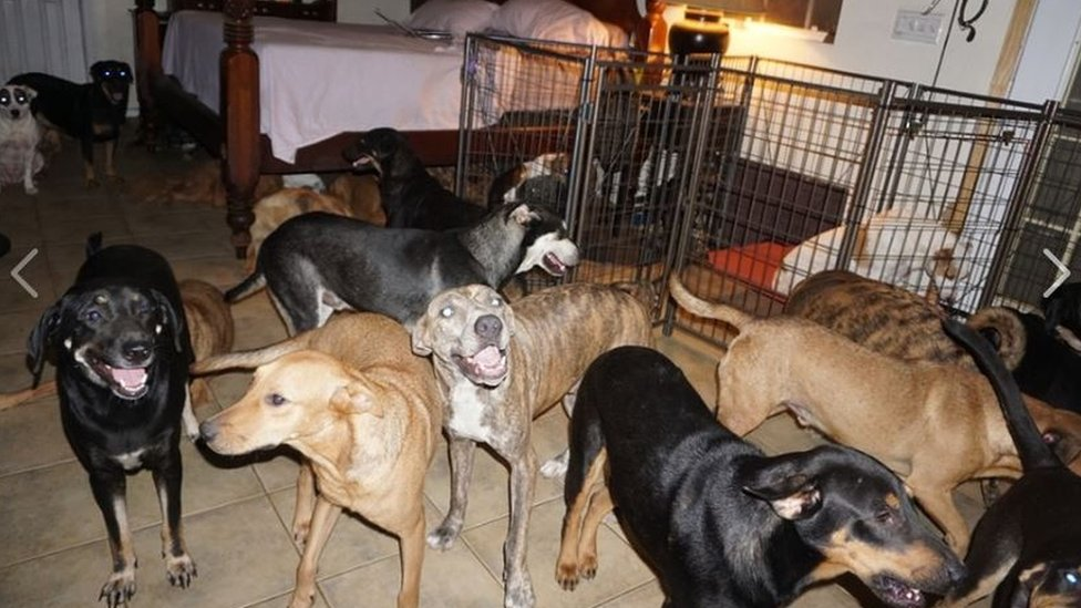 صورة لكلاب في منزل تشيلا فيليبس