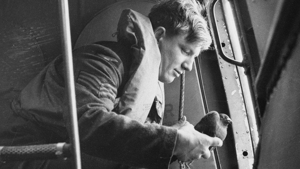 Liberando paloma mensajera desde un avión, 1941