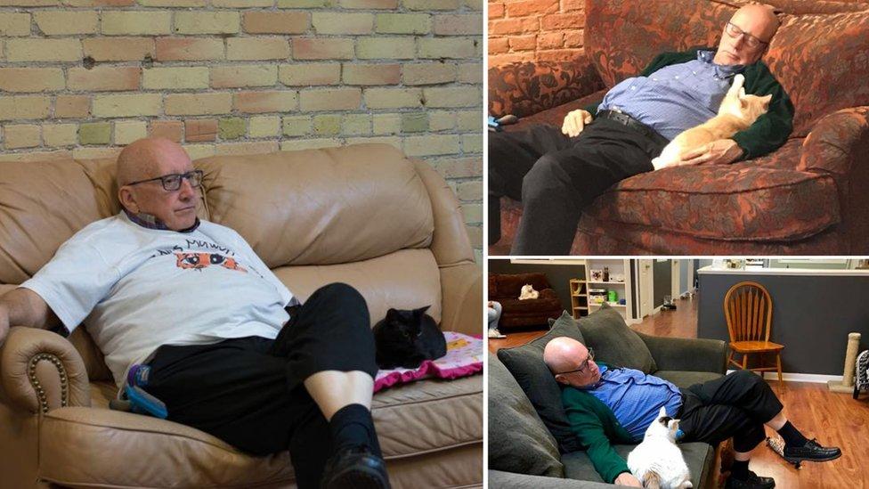Tres fotos de Terry con gatos en el sofá