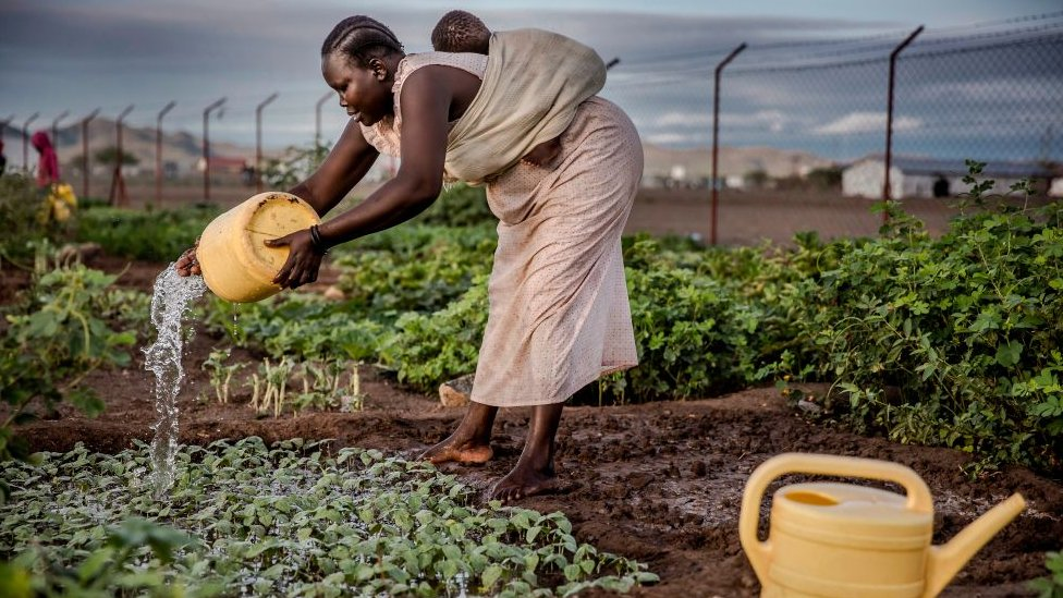 Woman carrying a baby waters vegetables on Friday 4 October 2019