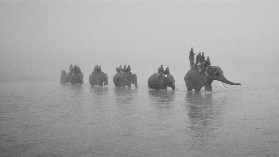 Safari elephants moving through a river