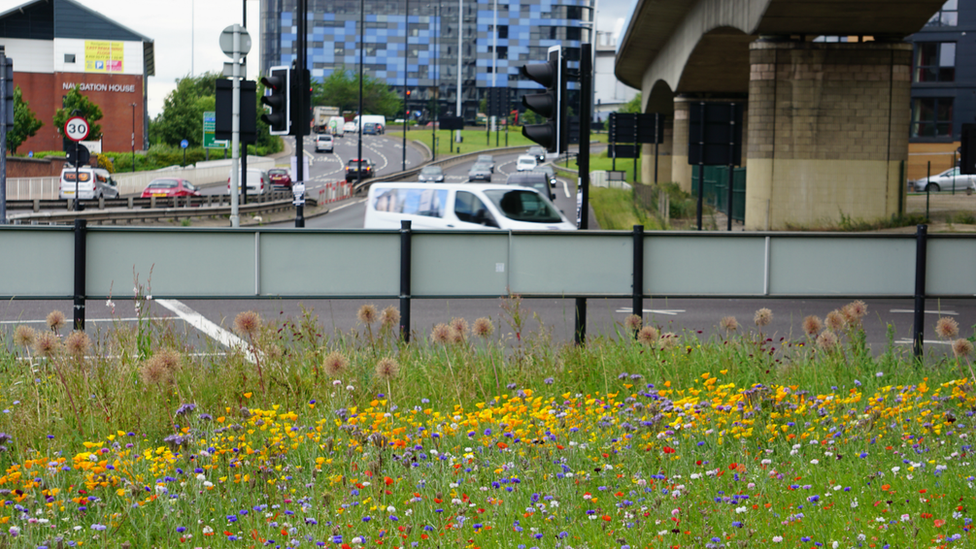 Roadside meadow in Sheffield