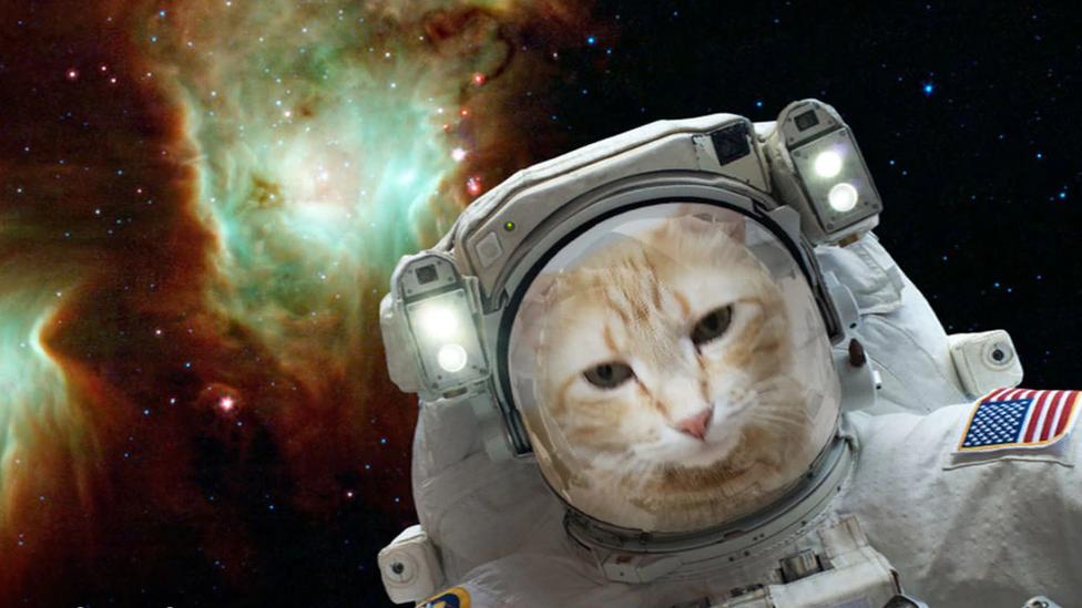 NASA створило мобільний додаток для селфі в космосі