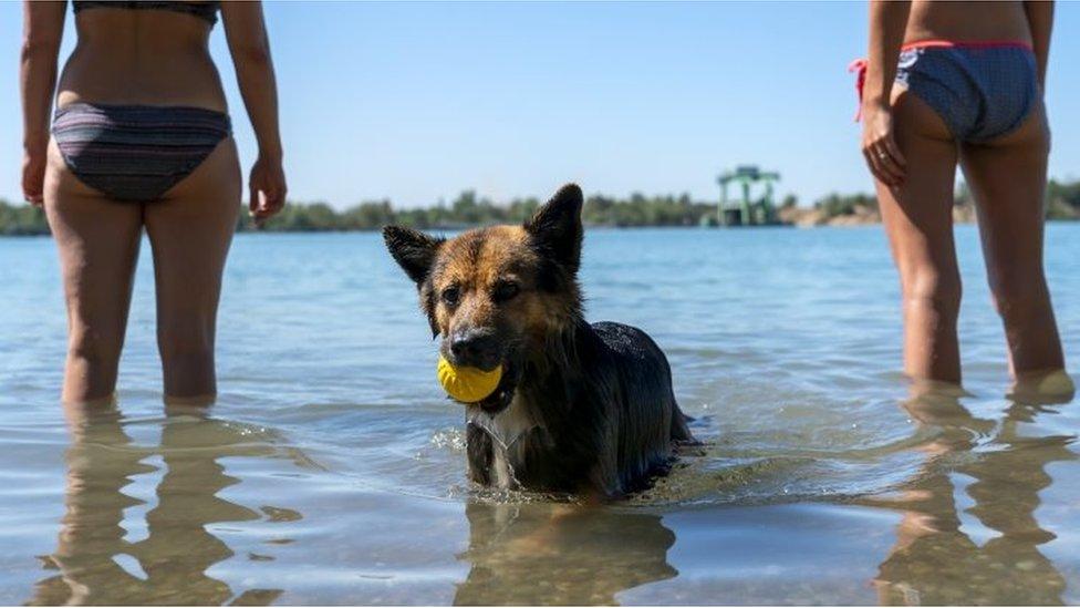 pas u vodi