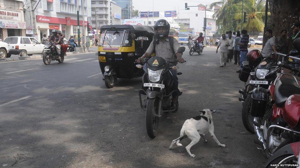 Dog in Kerala
