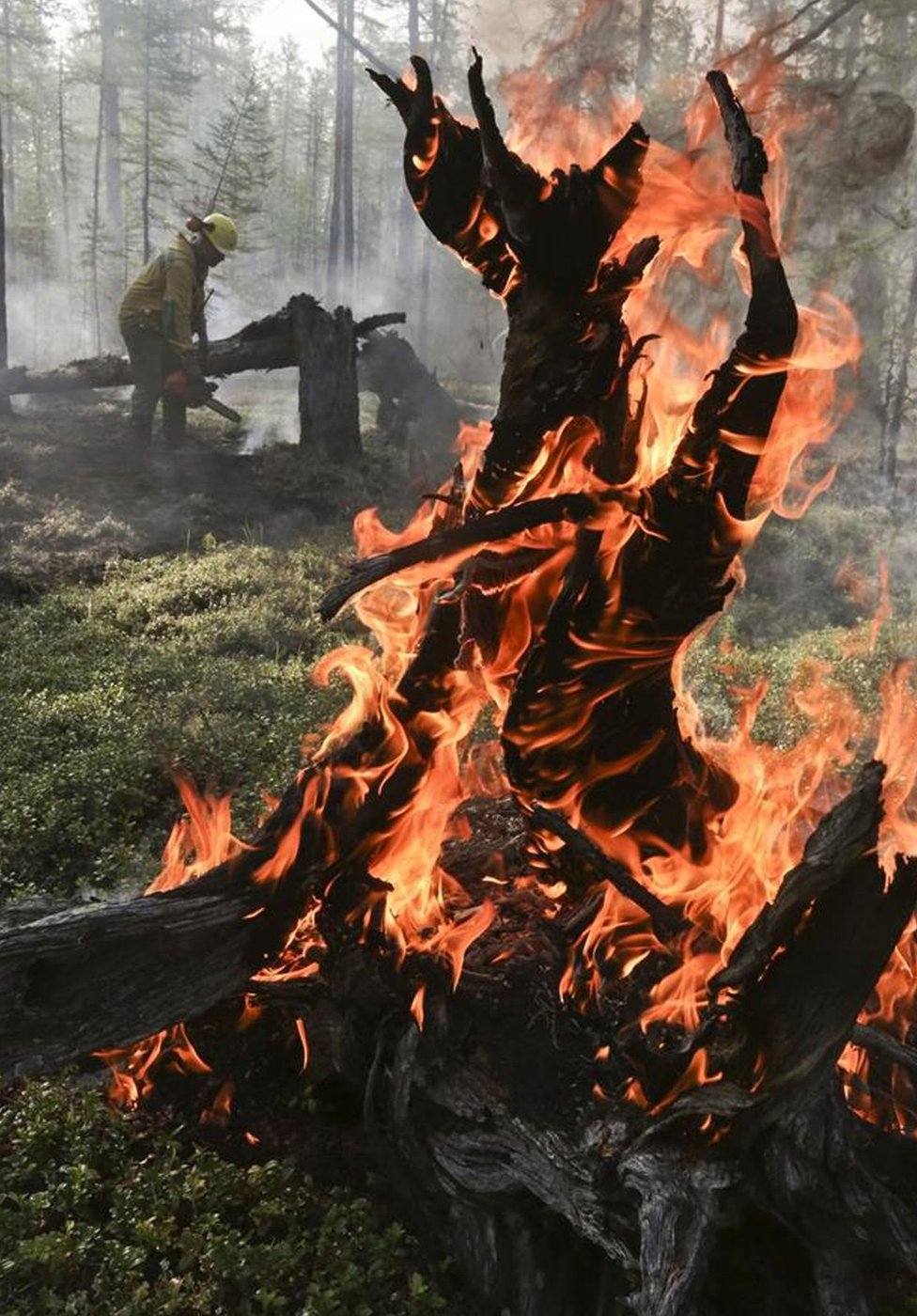 A burning tree in Krasnoyarsk region, Russia. Photo: 1 August 2019