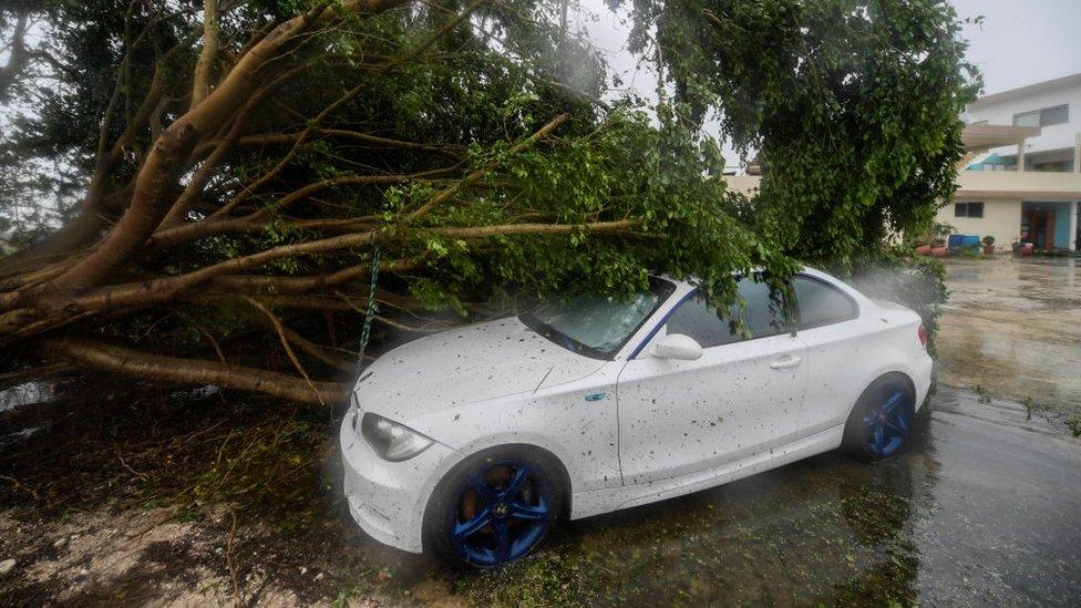 Caída de árboles en Cancún.