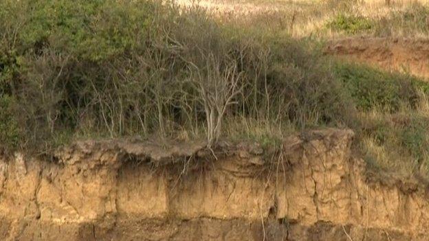 Trees on cliffs