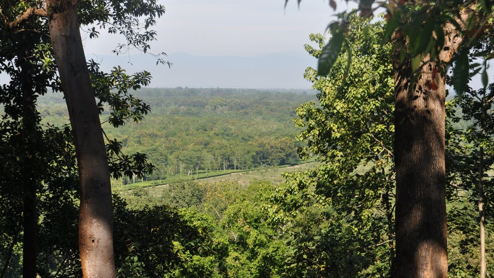Forest land being cleared for tea plantations in Assam