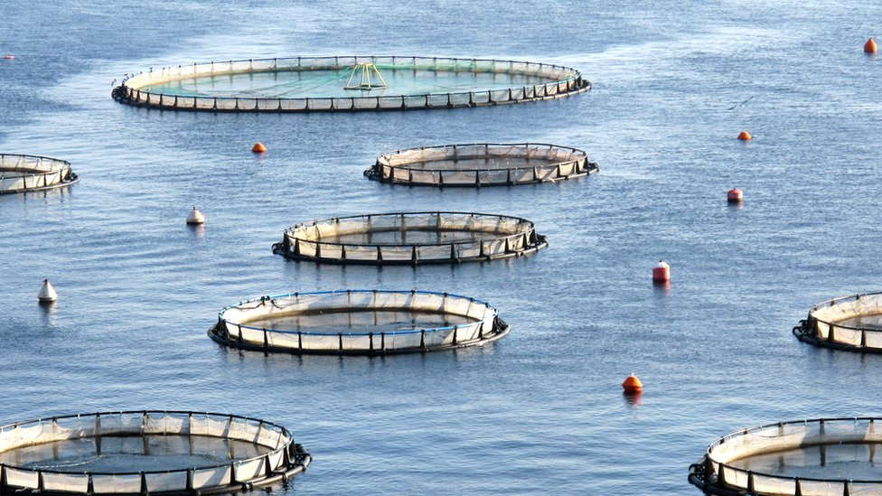 Salmon farms raided as part of EU competition probe