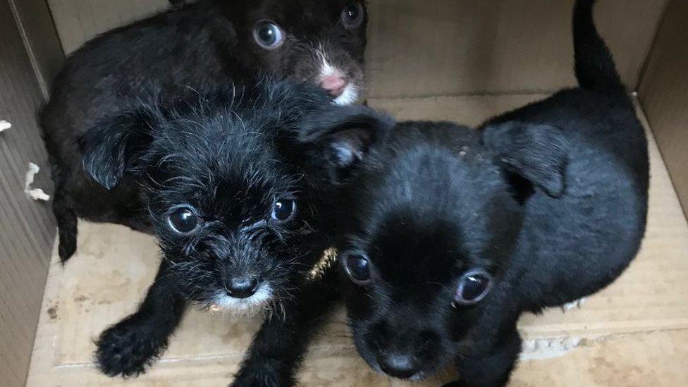 Three puppies abandoned in box in Darlington alleyway