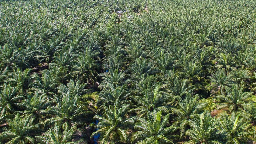 Plantaciones de palma de aceite