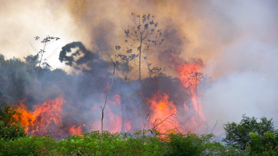 Una parte del amazonas quemándose