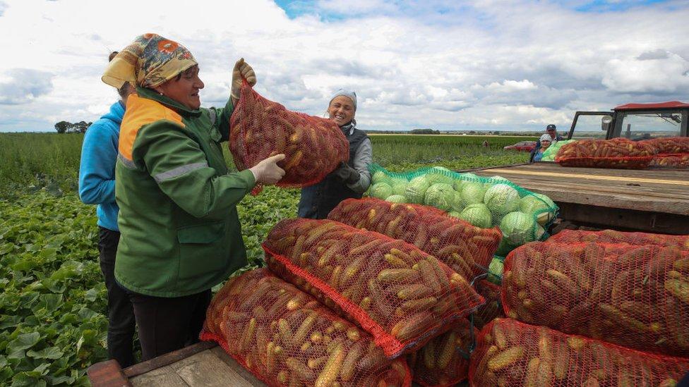 Agricultoras