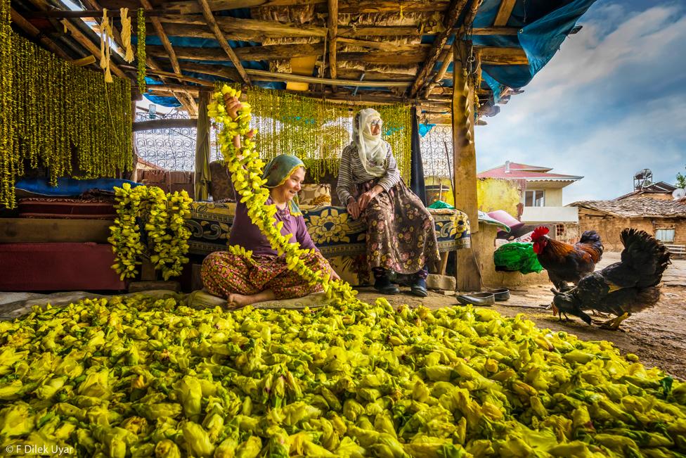 Mujeres rodeadas por okra amarilla