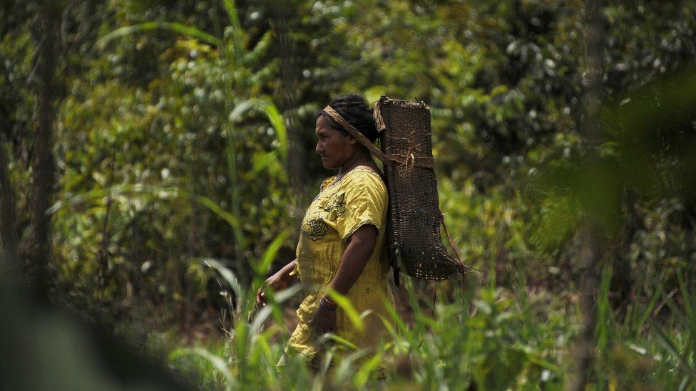 Domorotkinja etničke grupe Piaroa odlazi u šumu da sakuplja držva u okolini Puerto Ajačučo u Venecueli