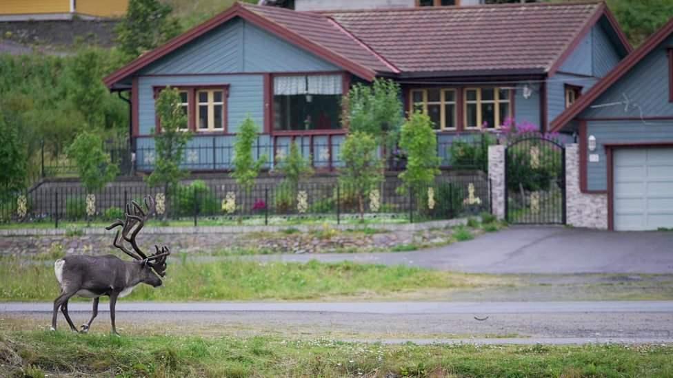 A reindeer approaches a residential property in Sami, Norway