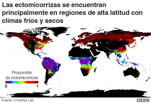 Mapa de distribución de ectomicorrizas