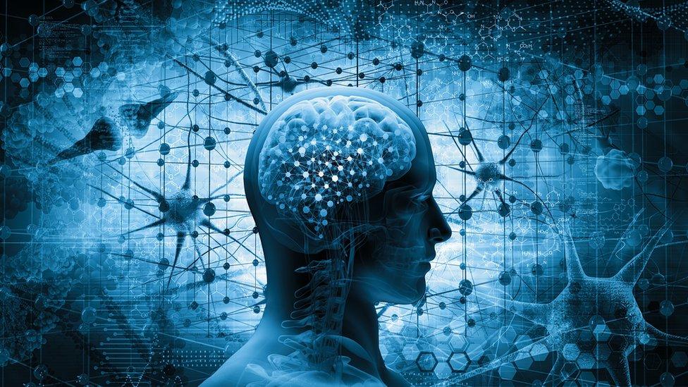 شكل توضيحي للمخ