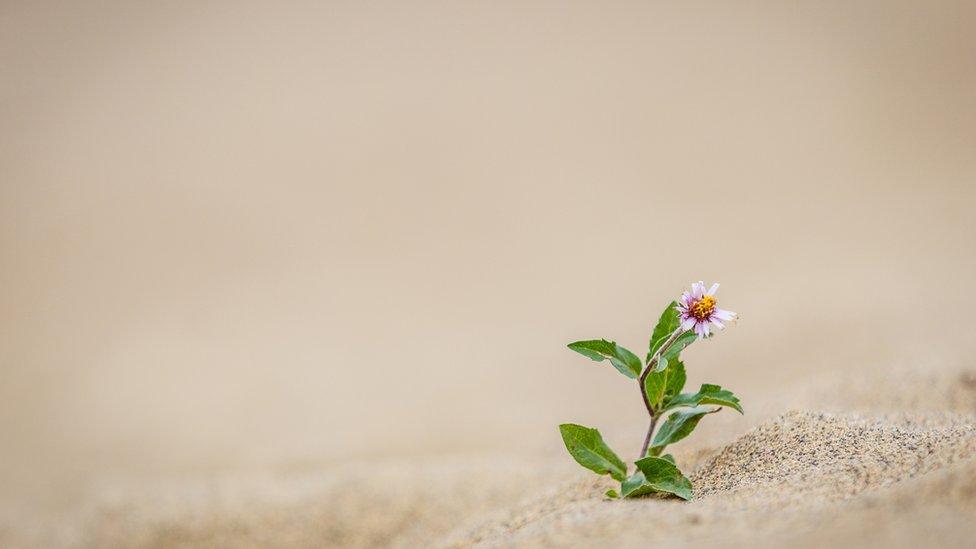 Flor en el desierto de Carcross