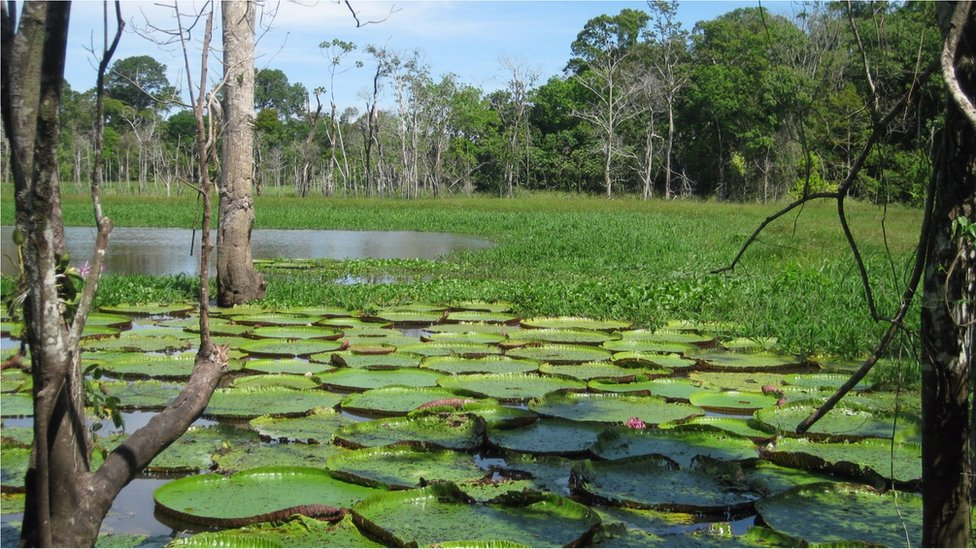 The Amazon basin is the largest and most complex river system in the world