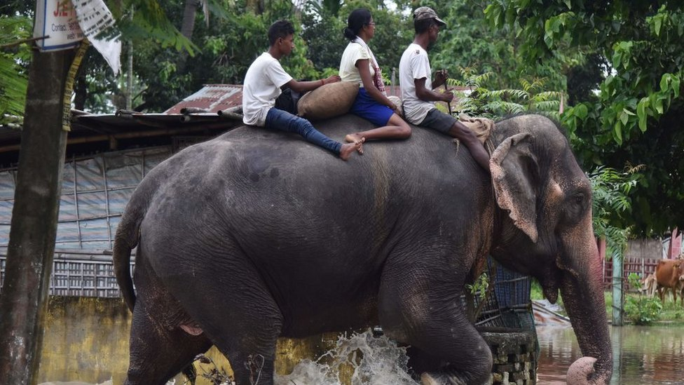 An elephant wades through flood waters with three people on its back in Koliabor, India.