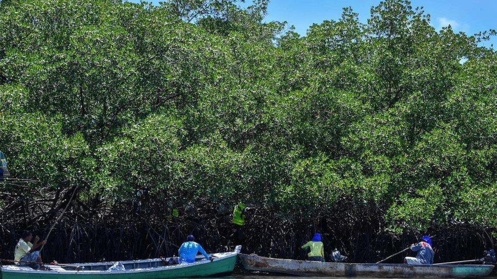 Voluntários removem óleo cru derramado em manguezais, no Cabo de Santo Agostinho, estado de Pernambuco, no Brasil, 2019