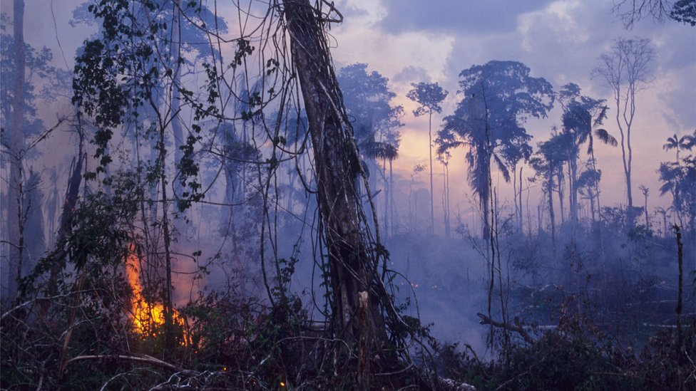 Forest being cleared for cattle ranching in Brazil