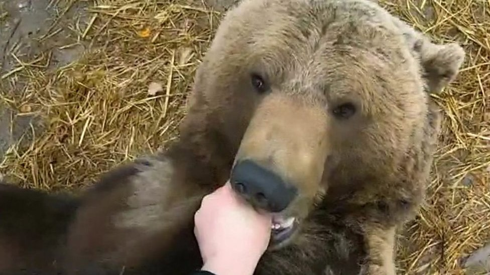 Russian pilot's special relationship with rescued bear