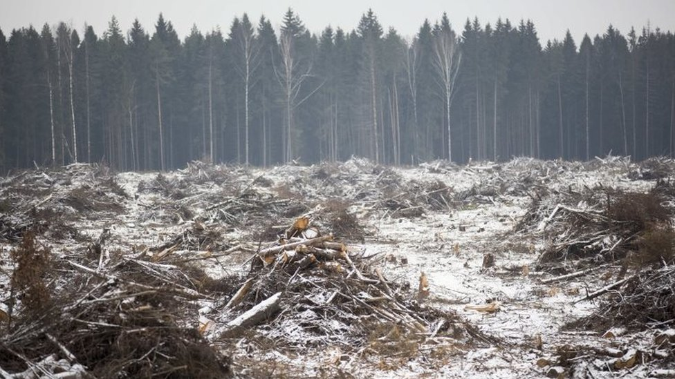 Trees are cut along a construction site in Moscow region, Russia. Photo: 17 November 2015