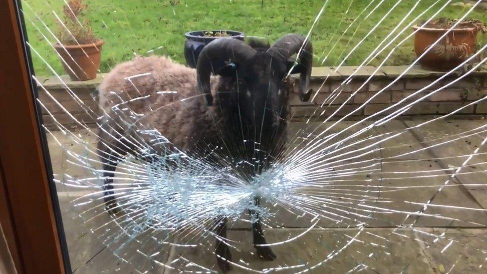 Ram and smashed windows