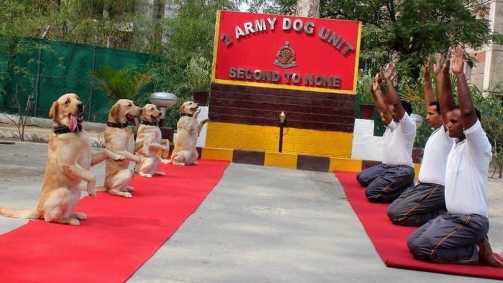 राहुल गांधी कुत्तों के योग की फोटो ट्वीट कर कहना क्या चाहते हैं - सोशल