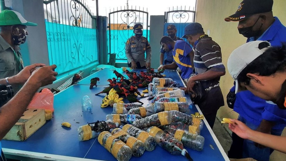 Parrots found stuffed in plastic bottles in Indonesia thumbnail