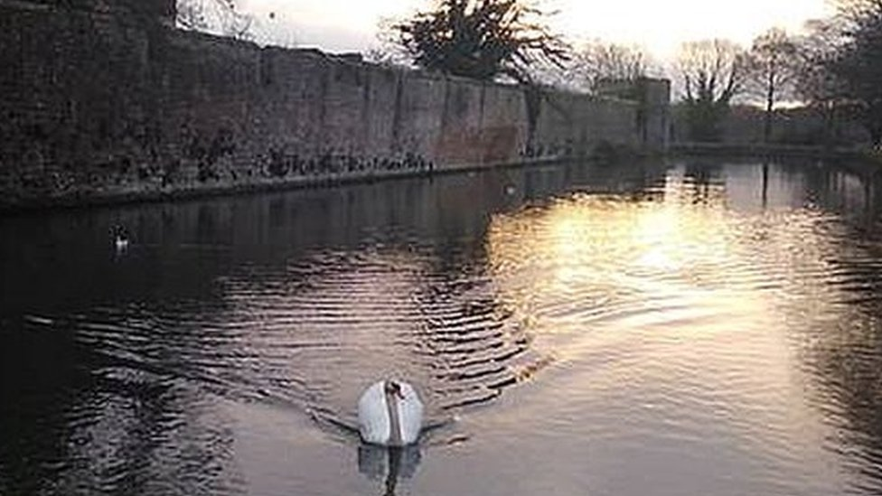 Bell-ringing 'widowed' swan called Wynn back The Bishop's Palace