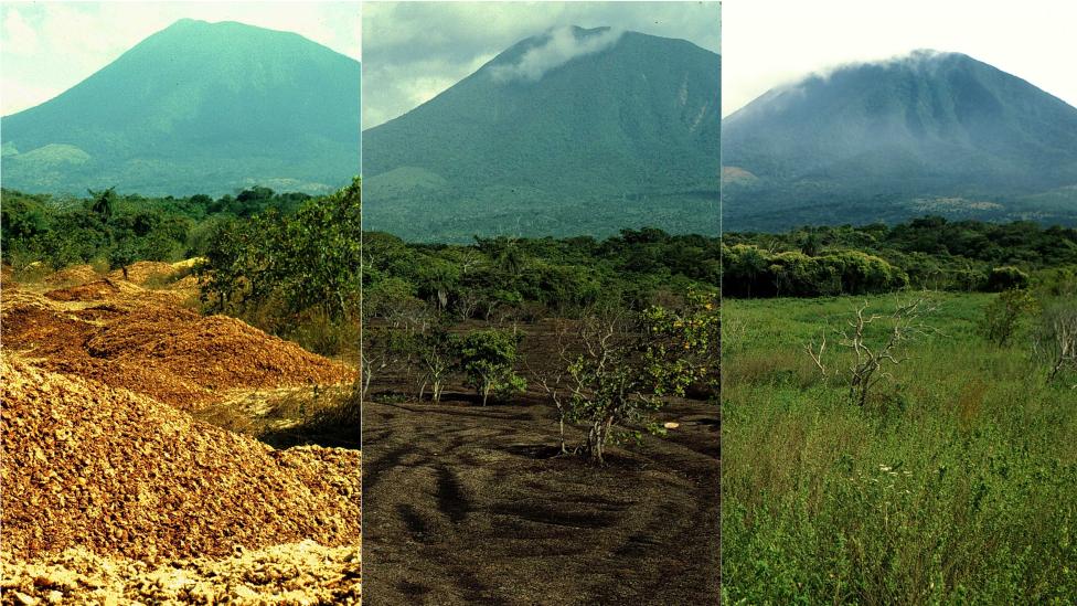 Este collage hecho por Janzen y Hallwachs muestra el rejuvenecimiento del área gracias a los desperdicios de naranjas.