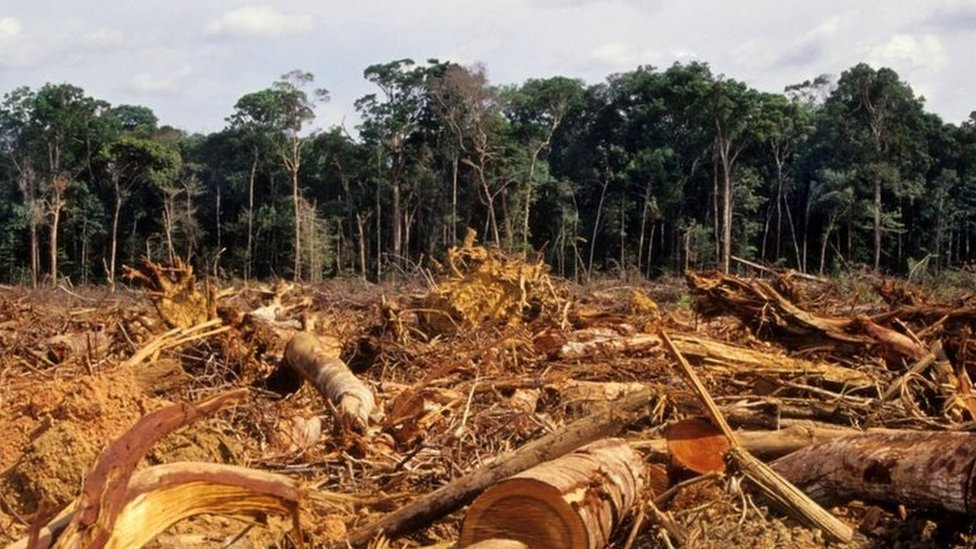 Lote desmatado na Amazônia