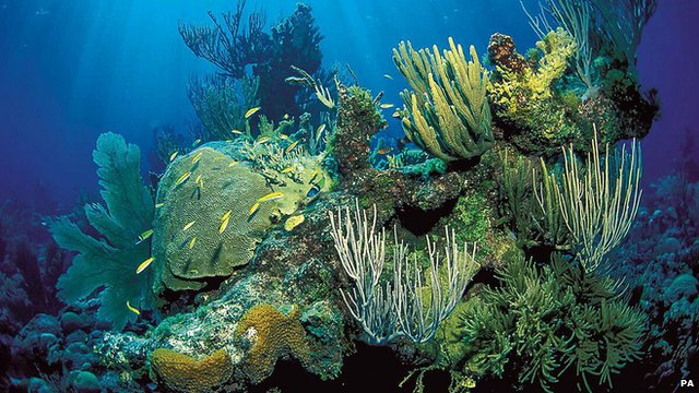 A coral reef landscape