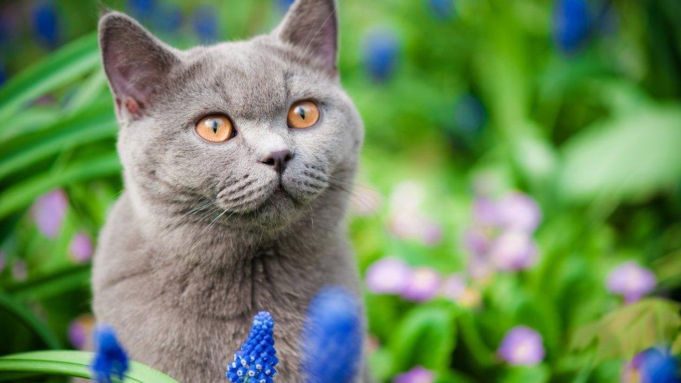 Los gatos son muy populares en redes sociales.