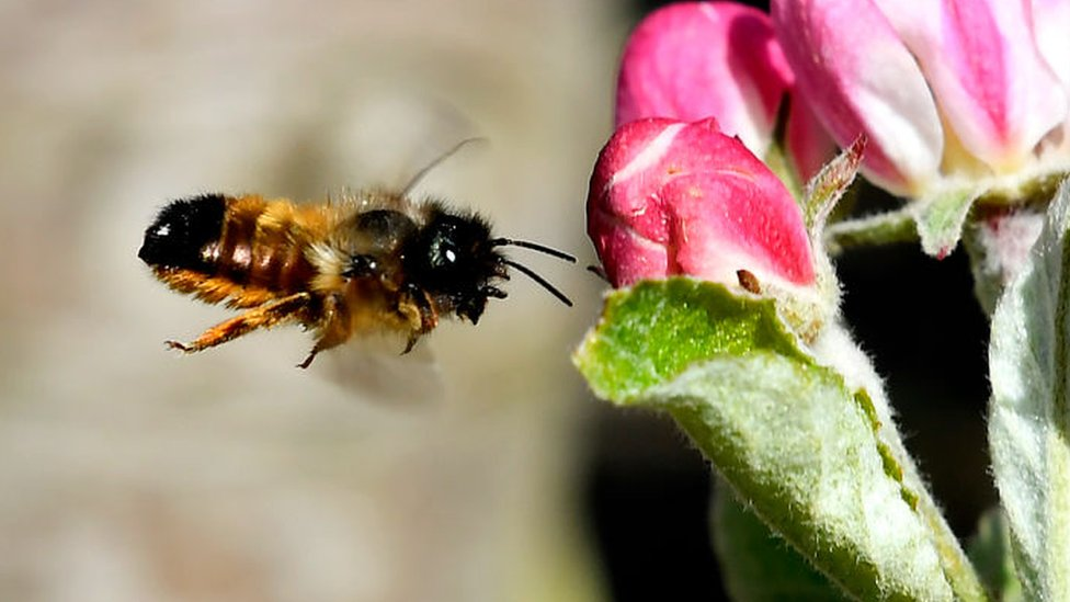 Ramsey park may get bee hotels to deal with climbing frame infestation